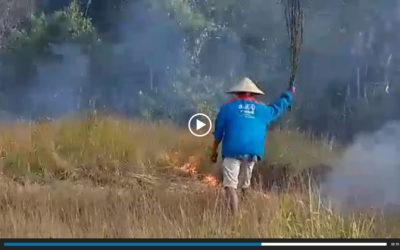 アボカド農園の火事発生、常駐の農民を雇うことにしました。